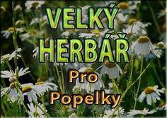 Healing Herbs, Medicinal Herbs, Homemade Cosmetics, Nordic Interior, Kraut, Herb Garden, Healthy Life, Herbalism, Flora