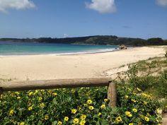 Praia de Nerga. Cangas. Pontevedra. Galicia. Playa natural. Medio Ambiente