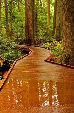 Boardwalk, Reflection, Trail of the Cedars, Glacier National Park, Montana