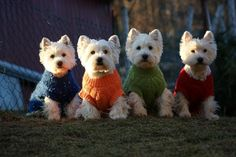 Westie's ready for the chilly weather!!