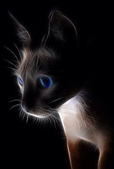 Cat fractal photo