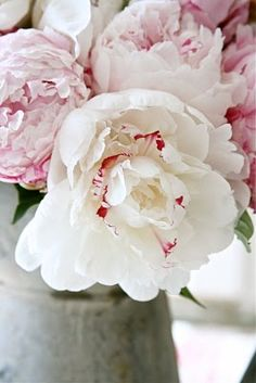 my all-time favorite flower:  the peony