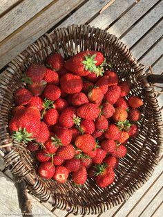 Der Garten leuchtet momentan in erdbeerrot und daraus entstand heute die beste Marmelade der Welt: gemischt mit Monatserdbeeren, Gelierzucker und den Saft einer Zitrone!