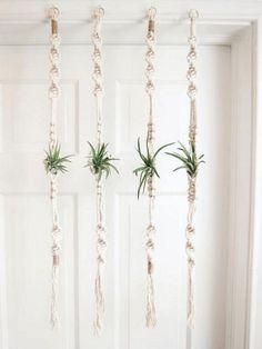 Air Plants Ideas 1723