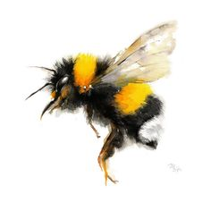 Bee watercolor painting - Bumble Bee Art Print. Nature Illustration. Honey Bee, Flying bee, Lovely Bee art by MiraGuerquin on Etsy https://www.etsy.com/listing/231807567/bee-watercolor-painting-bumble-bee-art