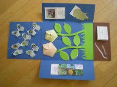 Kruschkiste: Lapbook zum Thema Wiese
