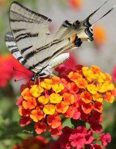 Flower and butterfly, 30 the most beautiful butterflies
