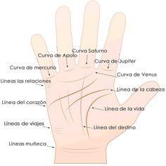 Linea del Corazon lectura de manos - Spiritual Reading español