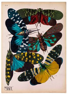 E.A. Seguy an artist, designer and etymologist was very prolific in the early part of the last century in France. This is part of a larger set of about 16 groups of Insects. Plate 16 shown here.