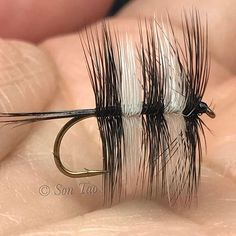 Bi-Visible Dapper #dryfly #dryflyfishing #flytying #flyty #flyfish #flytyingtable #flytyingaddict #flytyingjunkie #flytyingnation #flytyingbench #flytyingporn #troutflies #collinshackle #moonlitflyfishing #addictedtothevise #allaboutfishing_feature #flyfishing_feature