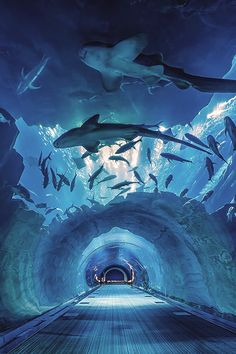 Aquarium Tunnel, Dubai – Amazing Pictures - Amazing Travel Pictures with Maps for All Around the World
