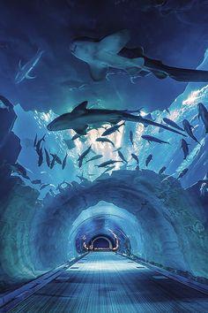 Aquarium Tunnel, Dubai