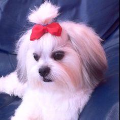 My princess Malteser, Teacup Puppies, My Princess, Cute Dogs, My Love, Baby, Animals, Friends, Long Hair