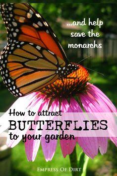 How to attract butterflies to your gaden and help save the monarchs Organic Gardening, Gardening Tips, Urban Gardening, Garden Plants, Flowering Plants, Eco Garden, Garden Bed, Landscaping Plants, Monarch Butterfly
