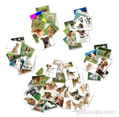 doggie paw print Made using Loupe - a fun & fast way to make cool creations with your photos.