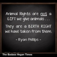 Stop Animal Cruelty!!Go Vegan!!Adopt,Don't Breed Or Buy!!Have Compassion!!