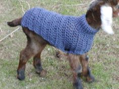 Crochet a sweater for a baby goat - can you imagine a rainbow of sweaters on our babies in the spring???  How fun!!