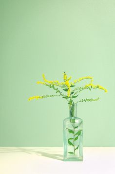 Nature Botanical Art Photograph - Goldenrod