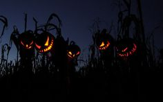 These creepy pumpkins in the cornfield remind me of Sleepy Hollow
