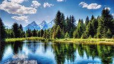 fir trees - Google Search