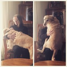 This dog who awkwardly sat in this stranger's lap to make his human jealous. | The 38 Most Awkward Dogs Of 2015