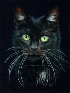 Pastel Cats - great dry pastel #drawings ...: