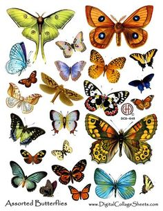Butterfly Digital  Collage Sheet DCS-648 DigitalCollageSheets Butterflies... 3.75, via Etsy.