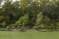 Wachau Dog Walking, River, Dogs, Photography, Outdoor, Outdoors, Photograph, Pet Dogs, Fotografie