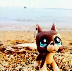Lps dog on the beach