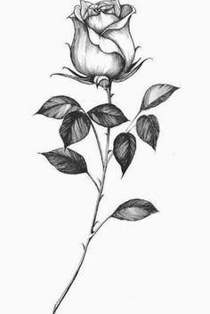 Rose Drawing Tattoo, Realistic Rose Tattoo, Tattoo Design Drawings, Tattoo Sketches, Tattoo Designs Men, Single Rose Tattoos, White Rose Tattoos, Rose Tattoos For Men, Wrist Tattoos For Women