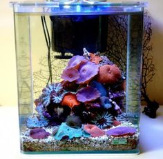 Coral Reef Aquarium, Nano Aquarium, Aquarium Ideas, Marine Aquarium, Aquarium Fish, Saltwater Tank, Saltwater Aquarium, Cool Fish Tanks, Reef Tanks
