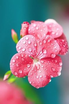 Pink flower with water droplets