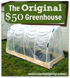The Original $50 DIY Greenhouse! Perfect for tomatoes.