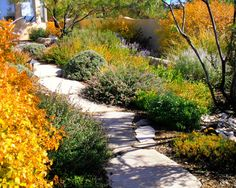 Fall in a high desert garden
