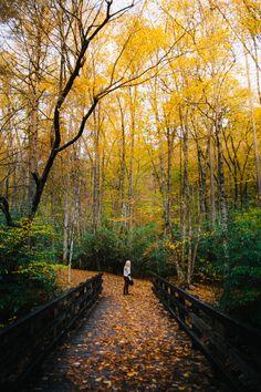 Autumn Leaf Color, Autumn Leaves, Amazing Nature Photos, Autumn Scenes, Four Seasons, Railroad Tracks, Paths, Country Roads, Fall