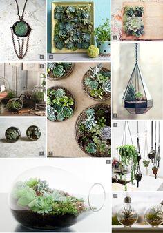 Cute succulent terrarium ideas