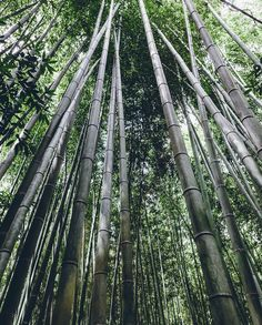 Lookup on #Kyoto Bamboo forest (by nandinjp)