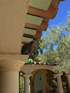 Phiphi,notre pigeonne de 9 ans Provence, Outdoor Decor, Home Decor, Vacation Places, Bedrooms, Interior Design, Home Interior Design, Home Decoration, Provence France