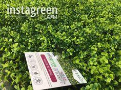 "InstagreenLatam on Twitter: ""#Instagreenlatam #jardinvertical #greenwall #follajesartificiales #panama #arquitectura #decoracion #espaciointerno #construccion #verde https://t.co/sXVgWTUsqT"""