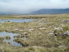 Irish Atlantic Blanket Bog HabitatAtlantic blanket bogs cover the landscape of the west coast from sea level to an altitude of 200m. Here, rainfall is 1,200mm per year and the acid peat substrate ranges from 2 to 7m deep.