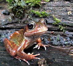 garden frog by Garden Frogs, Rain Garden, Preformed Pond Liner, Leather Swivel Chair, Turtle Pond, Daintree Rainforest, Romantic Scenes, Beautiful Bugs, Small Ponds