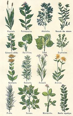 16 Awesome Ideas for DIY Christmas Decorations Art and Craft Vintage Botanical Prints, Botanical Drawings, Botanical Art, Vintage Flower Prints, Botanical Tattoo, Photo Wall Collage, Picture Wall, Collage Art, Room Posters
