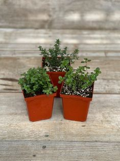 Thyme is a staple in any herb garden! With subtle flavours of mint and lemon, this herb pairs great with almost all dishes. Surrey BC www.westcoastgardens.ca
