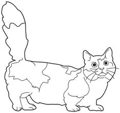 cat_68 cats coloring pages for teens and adults