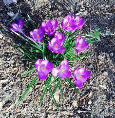 Spring has sprung on brooklyn
