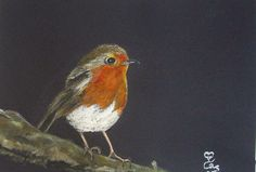 Robin (watercolour on black card from a photograph by Elly Rawling)