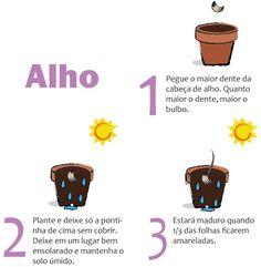 Abaixo, você confere algumas ilustrações que te ajudam a plantar e cultivar em vasos