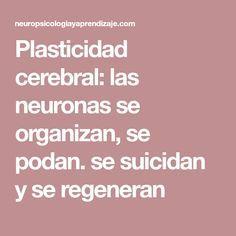 Plasticidad cerebral: las neuronas se organizan, se podan. se suicidan y se regeneran