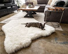 Treat A Dog's extra large, mid-century modern orthopedic dog bed doubles as an attractive memory foam area rug. This ultra soft polar bear faux fur dog bed matches pet comfort with home design. Giant Dog Beds, Pet Beds, Best Orthopedic Dog Bed, Faux Fur Bedding, Animal Print Bedding, Pekinese, Dog Shop, Plush Animals, Baby Animals