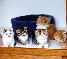 Oh dear, too much cuteness! I want the one with the flopped over ears in the front!